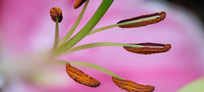 rouw groningen bloem